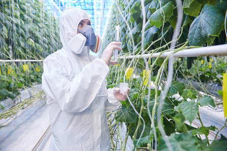 Trabajador en traje de materiales peligrosos en invernadero Foto de archivo