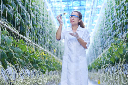 Female Scientist in Glasshouse Banque d'images