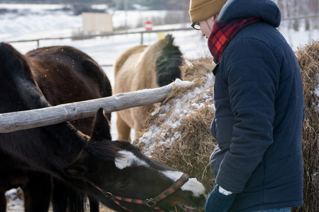 Young Man Feeding Horse on Ranch Banque d'images - 110025608