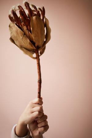 Exotic Dry Flower