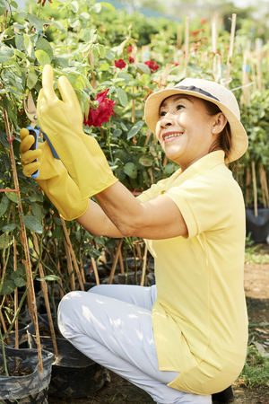 Smiling woman trimming roses