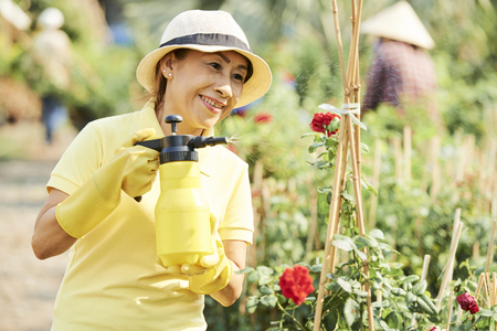 Smiling woman spraying flowers Stock Photo