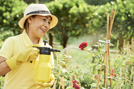 Happy woman spraying roses