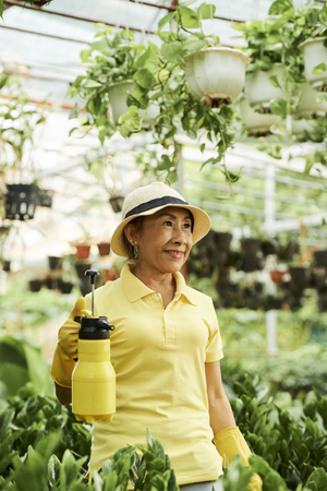 Woman working in greenhouse Stock Photo