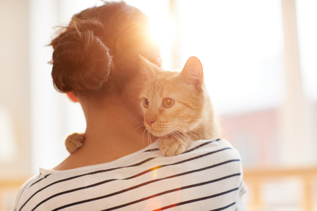Ginger Cat Embracing Owner Stock Photo