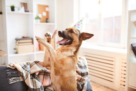 Cumpleaños De Perrito