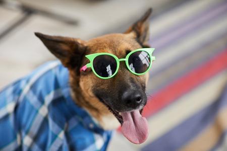 Summer Party Dogs Reklamní fotografie