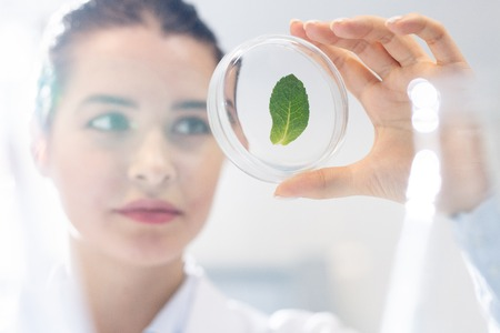 Biologist studying structure of plant leaf Stock Photo