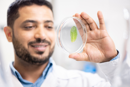 Arabian botanist studying plant
