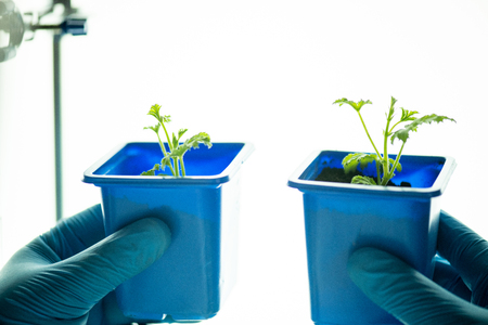 Comparing plants grown in different conditions Stock Photo