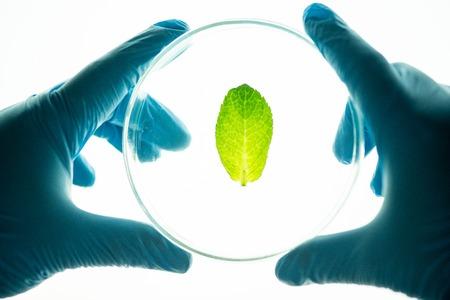 Studying leaf of plant