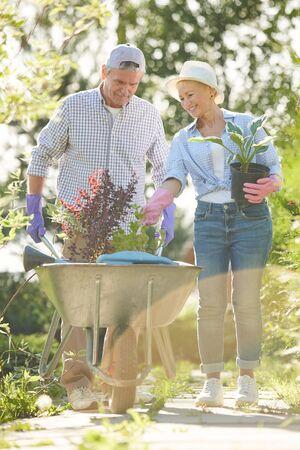Retrato de cuerpo entero de la feliz pareja senior caminando hacia la cámara en el jardín empujando el carro con plantas Foto de archivo