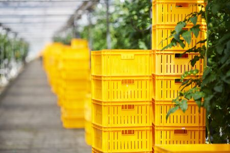 Garden products packed into yellow crates ready for shipment, stack of boxes in greenhouse