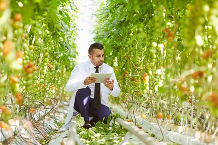 Concentrated handsome young middle-eastern biologist in lab coat sitting on plantation in greenhouse and checking data on tablet