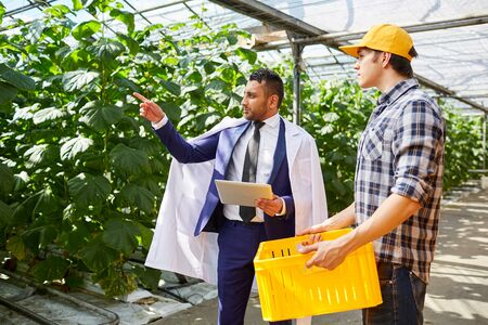 Middle-eastern businessman in suit and lab coat standing on plantation in greenhouse and talking to worker with box