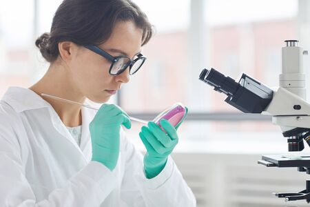 Side view portrait of young woman working in laboratory, preparing test samples in petri dish for microscope research, copy space Фото со стока