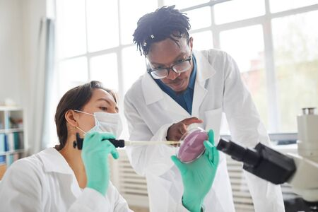 Portrait of two young scientist working in medical laboratory inspecting bacteria in petri dish, copy space Reklamní fotografie