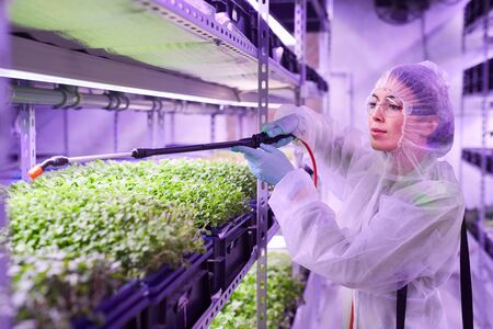 Portrait of female agricultural engineer spraying fertilizer while working in plant nursery greenhouse lit by blue light, copy space
