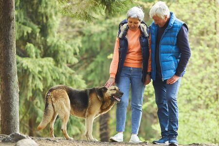 Full length portrait of active senior couple petting big shepherd dog while hiking in sunlit forest