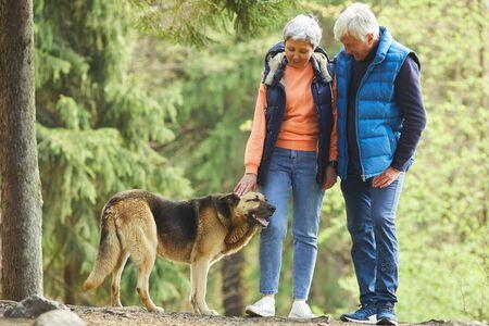 Ganzaufnahme eines aktiven Seniorenpaares, das beim Wandern im sonnenbeschienenen Wald einen großen Schäferhund streichelt