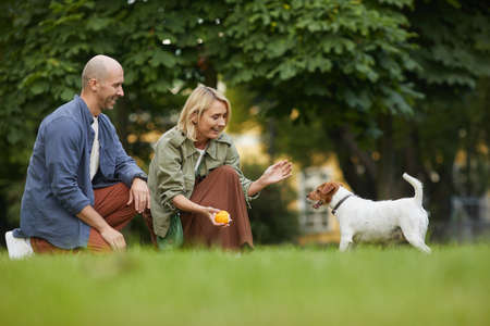 Side view portrait of adult couple playing with dog in park, focus on smiling woman holding ball to Jack Russel Terrier, copy space