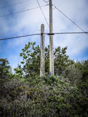 telegraaf: Telegraph pole in the bushes  Stockfoto