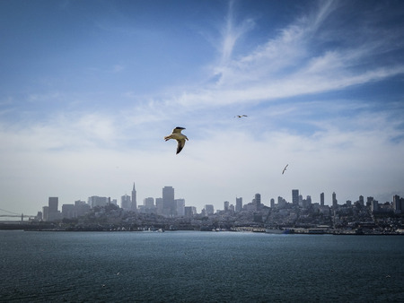 Flying seagull against San Francisco Skyline
