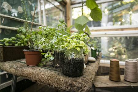 ハーブ (バジル、パセリ、オレガノ) と温室効果 写真素材