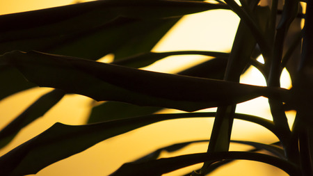 A close-up photo of a palm with sun. photo