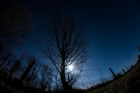 starlit sky: A glowing moon behind a tree in the night.