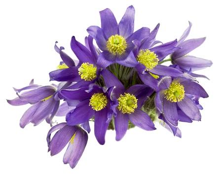 Bouquet von Schneegl�ckchen isoliert auf wei�em Hintergrund