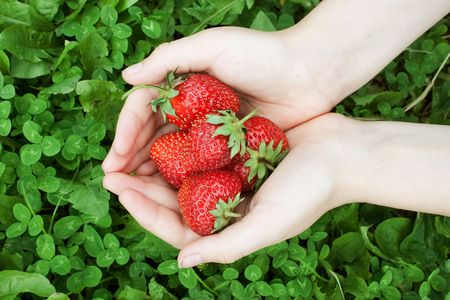 Two palms filled with ripe red strawberry Stock Photo