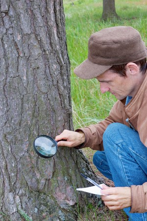 investigates: Young man attentively studies a tree bark in wood