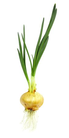 gave: Onion roots and gave the green sprout