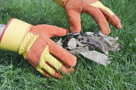 leathern: Gloves used in the care of lawn and garden Stock Photo