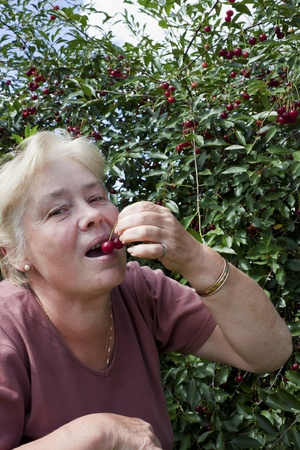 Woman in a garden collects cherry berries Stock Photo - 10207082