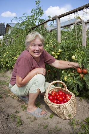 growers: Elderly mistress of a kitchen garden reaps a crop