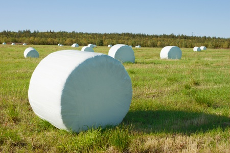 Hay is packed in the field into a white material