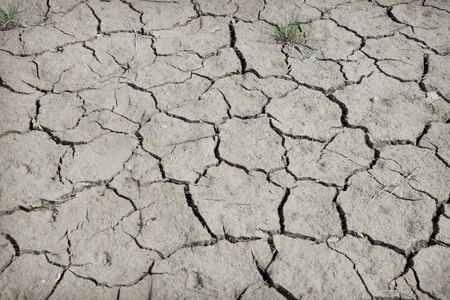 Earth has dried up and has cracked from summer heat photo