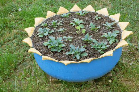A flower bed made ​​from old car tires Stock Photo