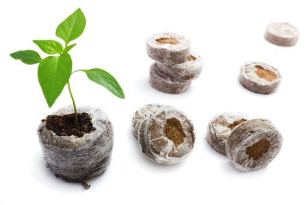 briquettes: Peat briquettes for growing seedlings and young plants