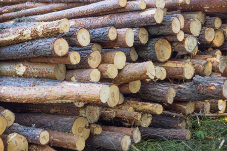 felled: A huge pile of felled trees lying in the forest