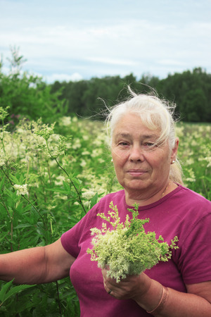 officinal: Elderly woman picking flowers meadowsweet in the meadows