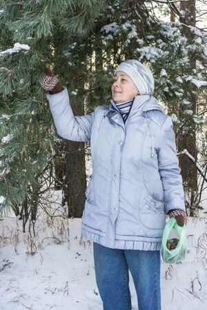 herbolaria: El herbolario reúne piñas con fines medicinales en el bosque de invierno