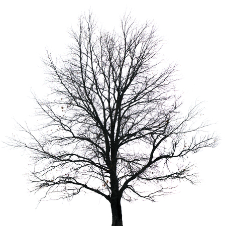 Silhouette of tree with bare branches. Winter scenery