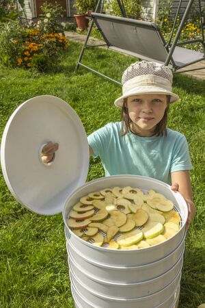 Girl holding cover electricdryer with green, yellow delicious dry homemade pieces apple 版權商用圖片