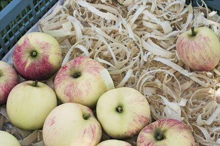 Several ripe apples are stacked in a box on a pillow of shavings