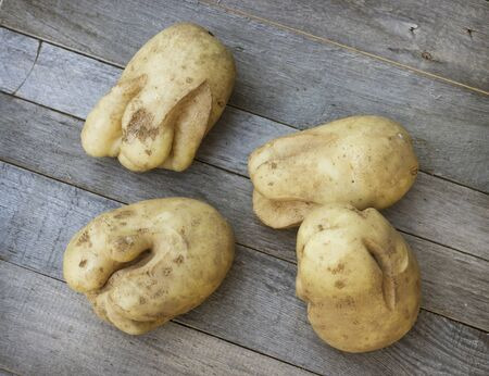 On table lies cracked potatoes because ofunfavourable summer period