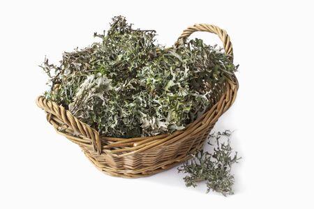Herbal Alternative Medicine. Plant moss Cetraria islandica on a white background