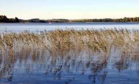 reflexion: A principios del Lago de hierba secas de oto�o, una reflexi�n sobre el agua